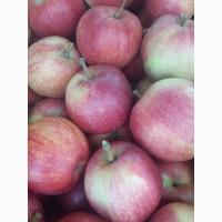 Продам яблоко Гала