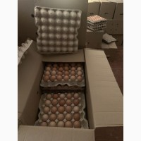 Инкубационное яйцо Редбро, Мастер грей, Испанка, Гриз бар