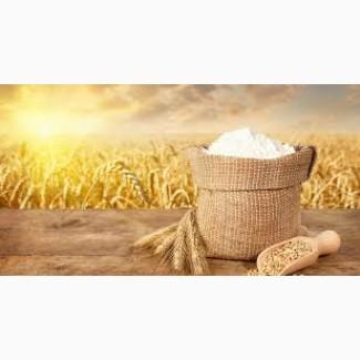 Продам борошно пшеничне, житнє вищого і першого гатунку