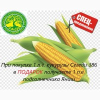 Семена кукурузы Сегеди 386, ФАО 390 СУПЕРПРЕДЛОЖЕНИЕ