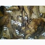 Продам гриб синяк сушений