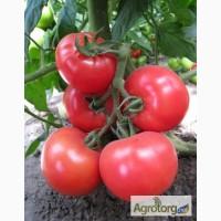Семена розового томата KS 14 F1 фирмы Китано