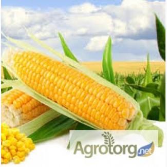 Купляєм кукурузу