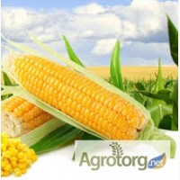 Купуєм кукурузу