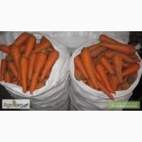 Куплю морковь с НДС