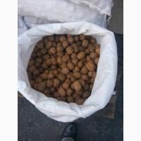 Продаю орех грецкий -28 (маленький)