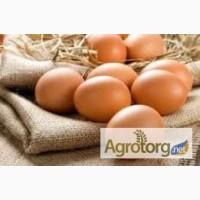 Продам яйця інкубаційні