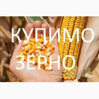 Закупляємо кукурудзу (не класну з повишеною вологістю) у Закарпатській області