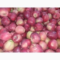 Загазированное яблоко от 10 тонн
