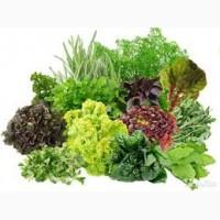 Продам салат, свежую зелень, пряные травы в ассортименте