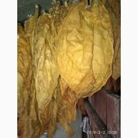 Продам листя тютюну сорт Берли