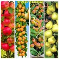 Саженцы колоновидных деревьев слива, персик, груша, черешня, яблоня.вишни