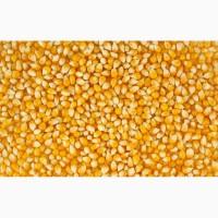 Закупаем кукурузу и другие зерновые культуры