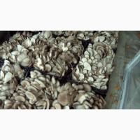 Продаем свежие грибы вешенка