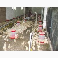 Продажа частной фермы по производству птицы, яиц, мяса