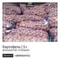 Картофель   Продажа картошки   ОПТ/Розница