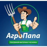 Воздушка чеснока - Любаша от Агропапы