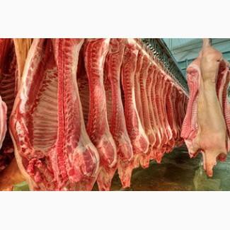 Мясо и субпродукты опт (свинина, говядина, птица, рыба)