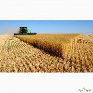 Купим пшеницу, ячмень, кукурузу.