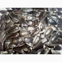 Семена подсолнечника сорта МАСТЕР (1репродукция) от производителя