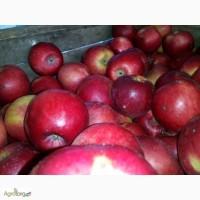 Продам яблука сорт айдарет і монтуан, за ціну можна домовитись, Хмельницька обл