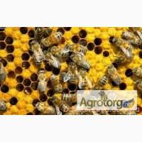 Бджолосімї та вулики