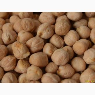 Продаём семена нута Сиерра, Заговит, Иордан, Азкан, Орион, Нортено, Триумф, Розана
