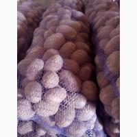 Продам картоплю харчову Белороса