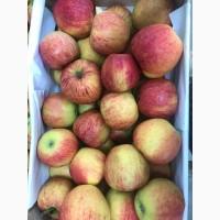 Продам яблука сорту Джона Голд оптом. Газовані