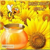 Мед подсолнечный