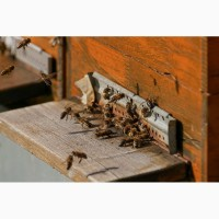 Бджлопакети
