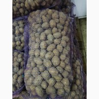 Семенная картошка Аризона