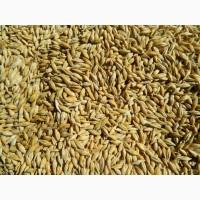 Продам ячмінь та пшеницю