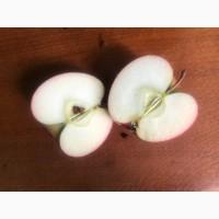 Продам яблука 3 сорта