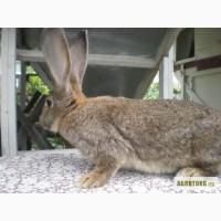 Продаж кроликов