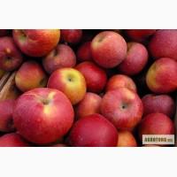 Яблоки опт