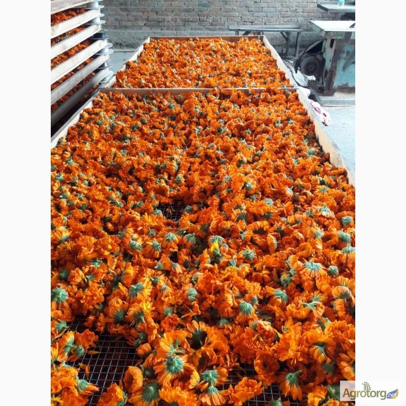 Цветы календулы сбор купить