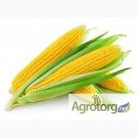 Семена кукурузы Оржица 237МВ, Солонянский, Любава продам.Товар сертифицирован