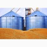 Компания закупает кукурузу фуражную 14.2.5/5.ОТ 200ТОНН