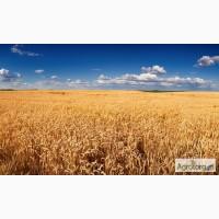 Купим пшеницу оптом по всей территории Украины