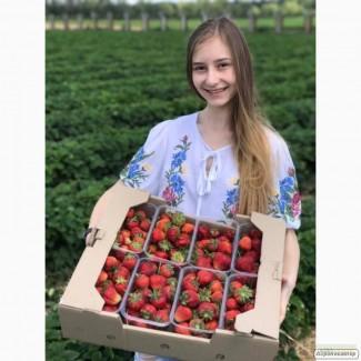 Продаж полуниці, вирощеної на власному полі. Еко-продукт