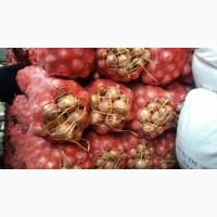 Продам лук с Киргизии и Казахстана