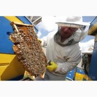 Продам бджолосім'ї терміново