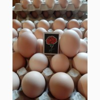 Продам яйця инкубационные КОББ 500 с доставкой по Украине