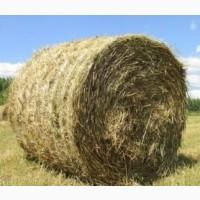 Продам тюкованую солому пшеницы