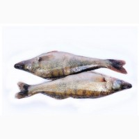 Рыба оптом. Свежемороженая речная рыба
