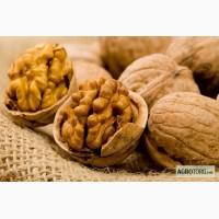 Продам орех грецкий нечищенный (оптом)
