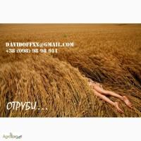 Продаем пшеничные отруби с производства