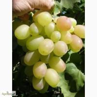 Продам виноград столовых сортов!Аркадия, Лора, Кеша, Кодрянка