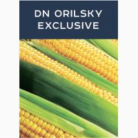 Продаем семена кукурузы DN ORILSKY EXCLUSIVE, производитель Евросем